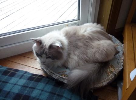 猫ベッド(ポポ)