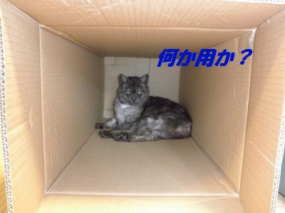 P7180240_20100719205920.jpg