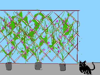 豆のグリーンカーテン