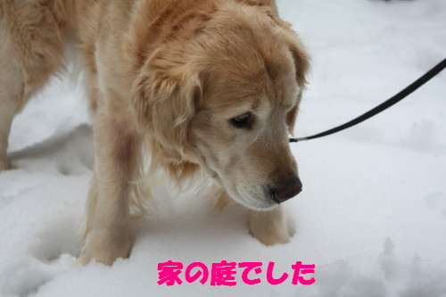bu-44640001.jpg