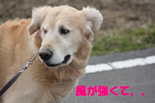bu-45380001.jpg
