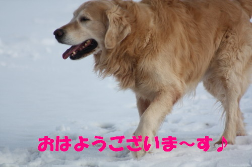 bu-46110001.jpg