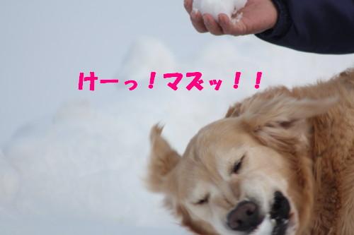 bu-46180001.jpg