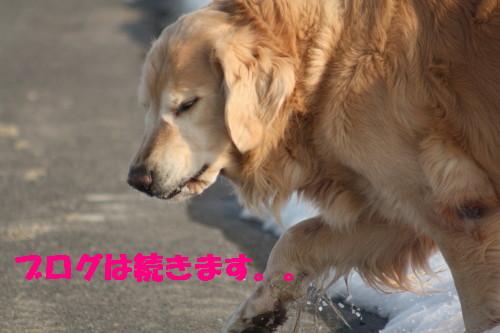 bu-47150001.jpg
