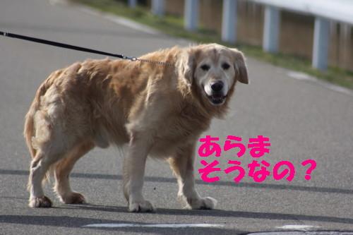 bu-47230001.jpg