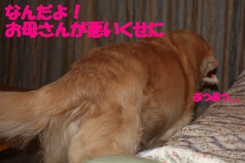 bu-62190001.jpg