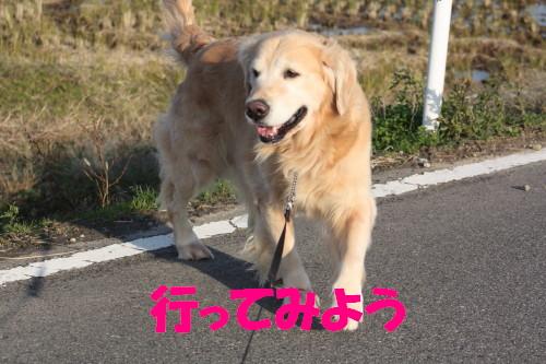 bu-62430001.jpg