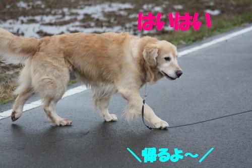 bu-63110001.jpg