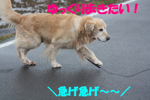 bu-63130001.jpg