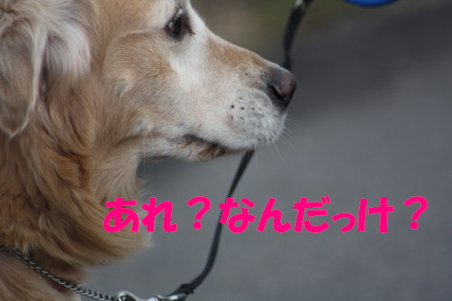 bu-63470001.jpg