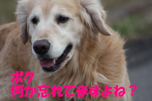 bu-63480001.jpg
