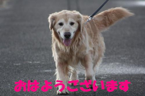bu-64690001.jpg