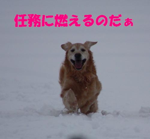 bu-65780001.jpg