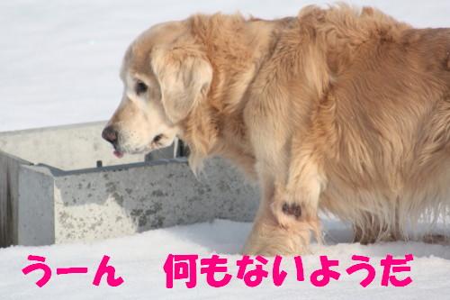 bu-66800001.jpg