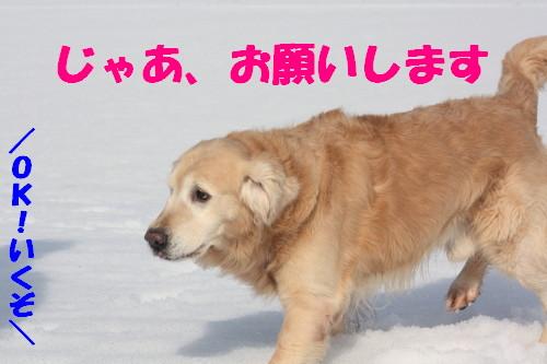 bu-66890001.jpg