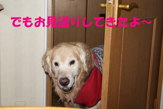 bu-84140001.jpg