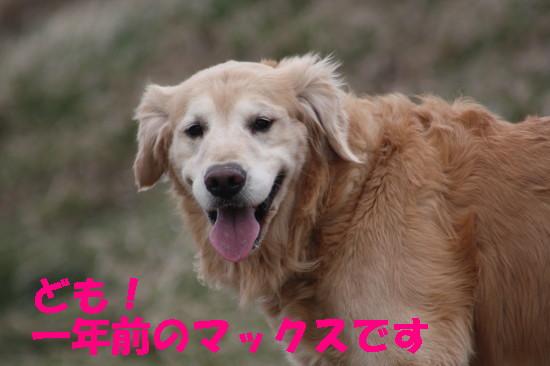 bu-84410001.jpg