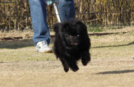 みーちゃん飛行犬1