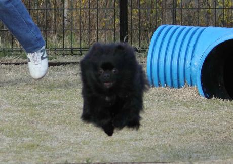 みーちゃん飛行犬6