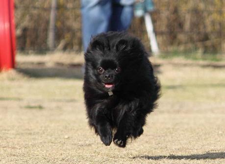 みーちゃん飛行犬4