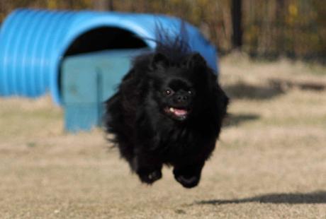 みーちゃん飛行犬5