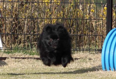みーちゃん飛行犬2