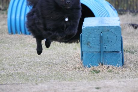 みーちゃん飛行犬7