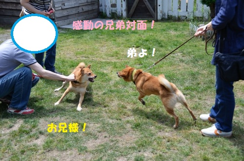 DSC_0035_01.jpg