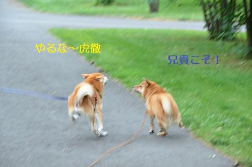 DSC_1258.jpg
