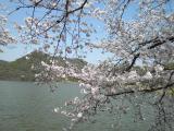 嵐山へお花見 017