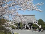 嵐山へお花見 013