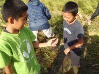 稲刈りイモリ
