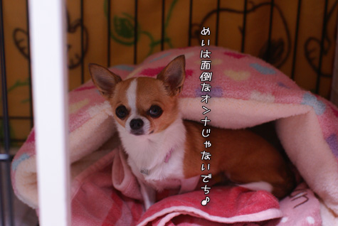 DSC032851016.jpg