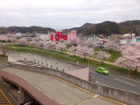鹿島桜並木