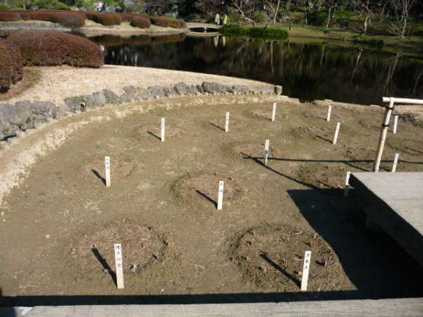 2010.2.20-東京ぶらりひとり旅005~東御苑037~二の丸庭園11