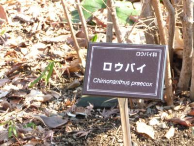 2010.2.20-東京ぶらりひとり旅005~東御苑037~二の丸庭園12ロウバイ
