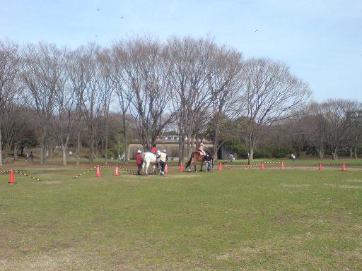 中央公園馬