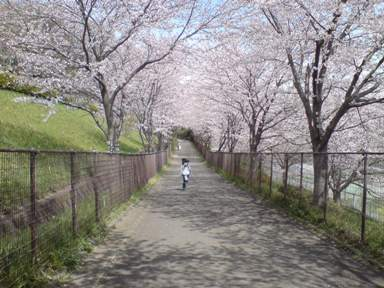文教大学桜