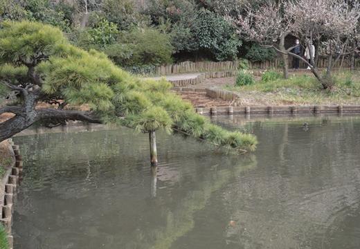 三溪園 (783)_R