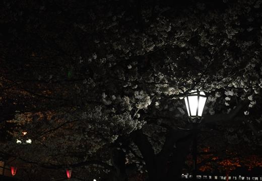 隅田公園 (22)_R