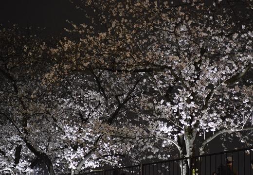 隅田公園 (56)_R