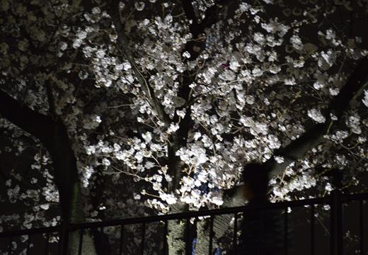 隅田公園 (61)_R