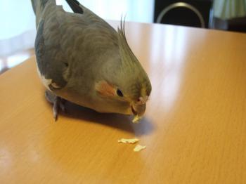 みかんのスジ食べてます