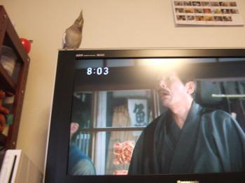 テレビの上がお気に入り