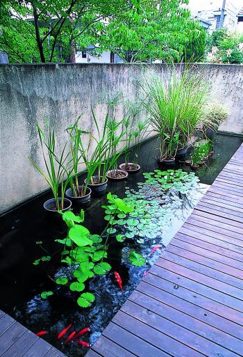 小金井 庭