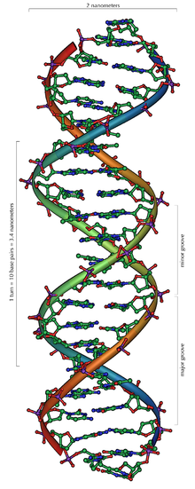 220px-DNA_Overview.png