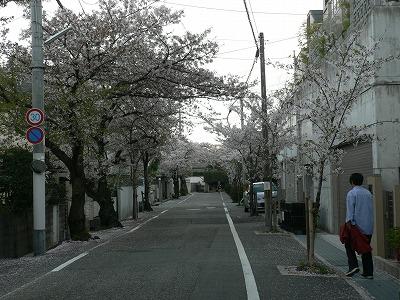野上桜道 北から