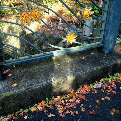 通玄橋~カラフルな、紅葉。