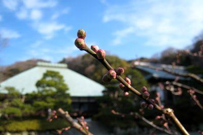 浄妙寺~しずかな、新年。