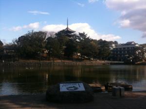 sarusawa0130_convert_20110130112527.jpg